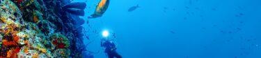 Little Cayman Dive Packages