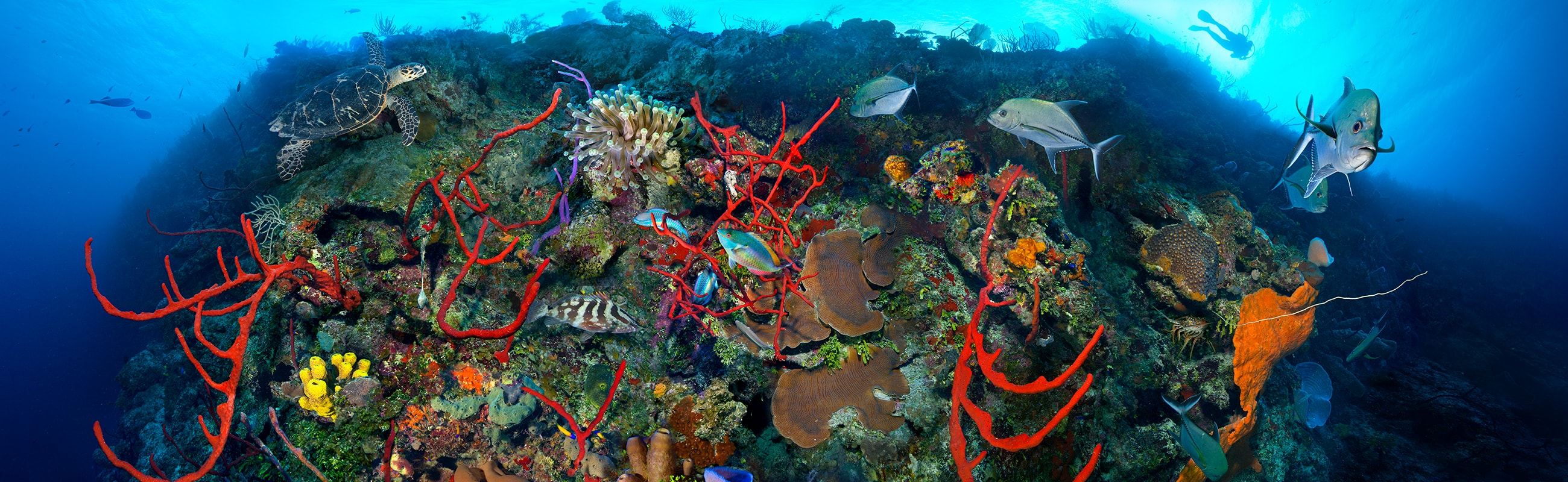Discover abundant, colorful marine life along tops of the walls and shallow sites