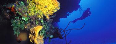 Little Cayman Scuba Diving