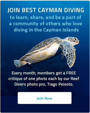 Join Best Cayman Diving