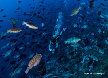 Recovery of Critically Endangered Nassau Grouper in the Caymans Following Conservation Efforts